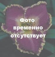 Denali (Stamile 1997)